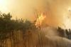 V. kiemelt fenyvőerdő tűz Tápióbicskén